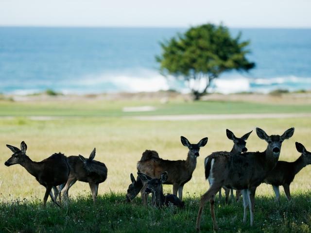 Avon Lake men charged with killing multiple deer