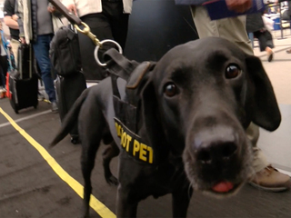 Dogs named in memory of first responders