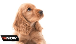 Finding the best dog breed to fit your needs